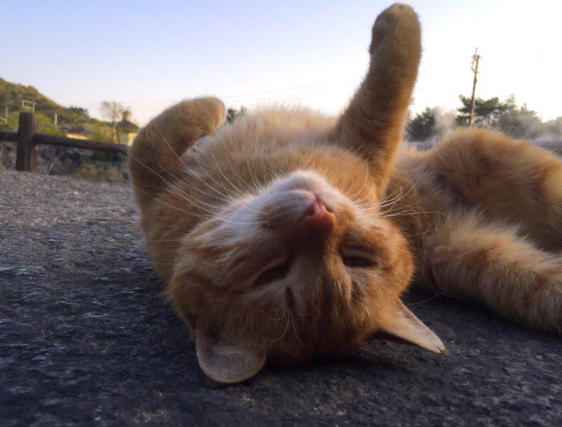 雲仙温泉でゆったり寛ぐ猫