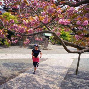 今日も本覚寺へお花見ラン