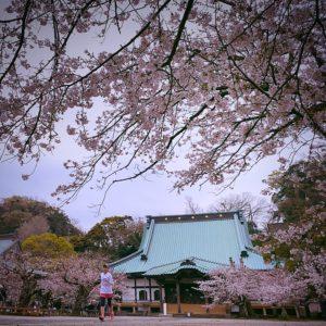 光明寺にお花見ラン