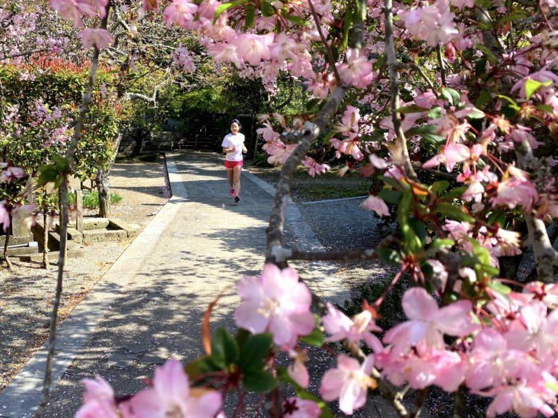 4/7妙本寺の桜とラン