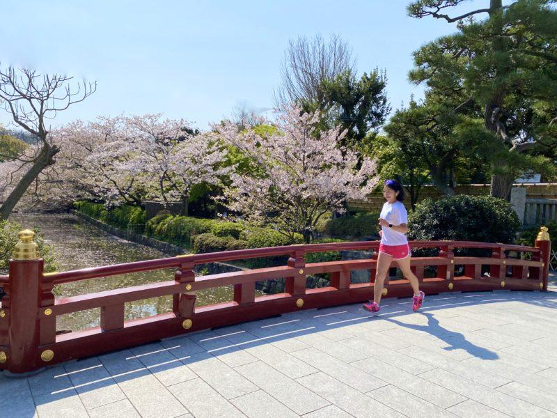 鶴岡八幡宮にお花見ラン