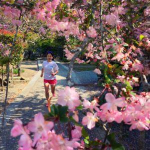 妙本寺にお花見ラン