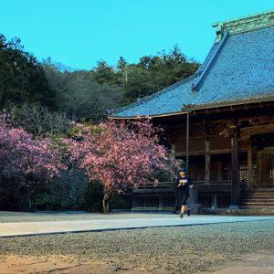 妙本寺へお花見ラン