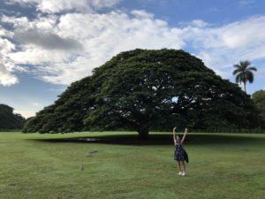 モアナルア・ガーデンの「日立の樹」