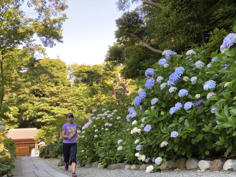 葛原岡神社の紫陽花とラン