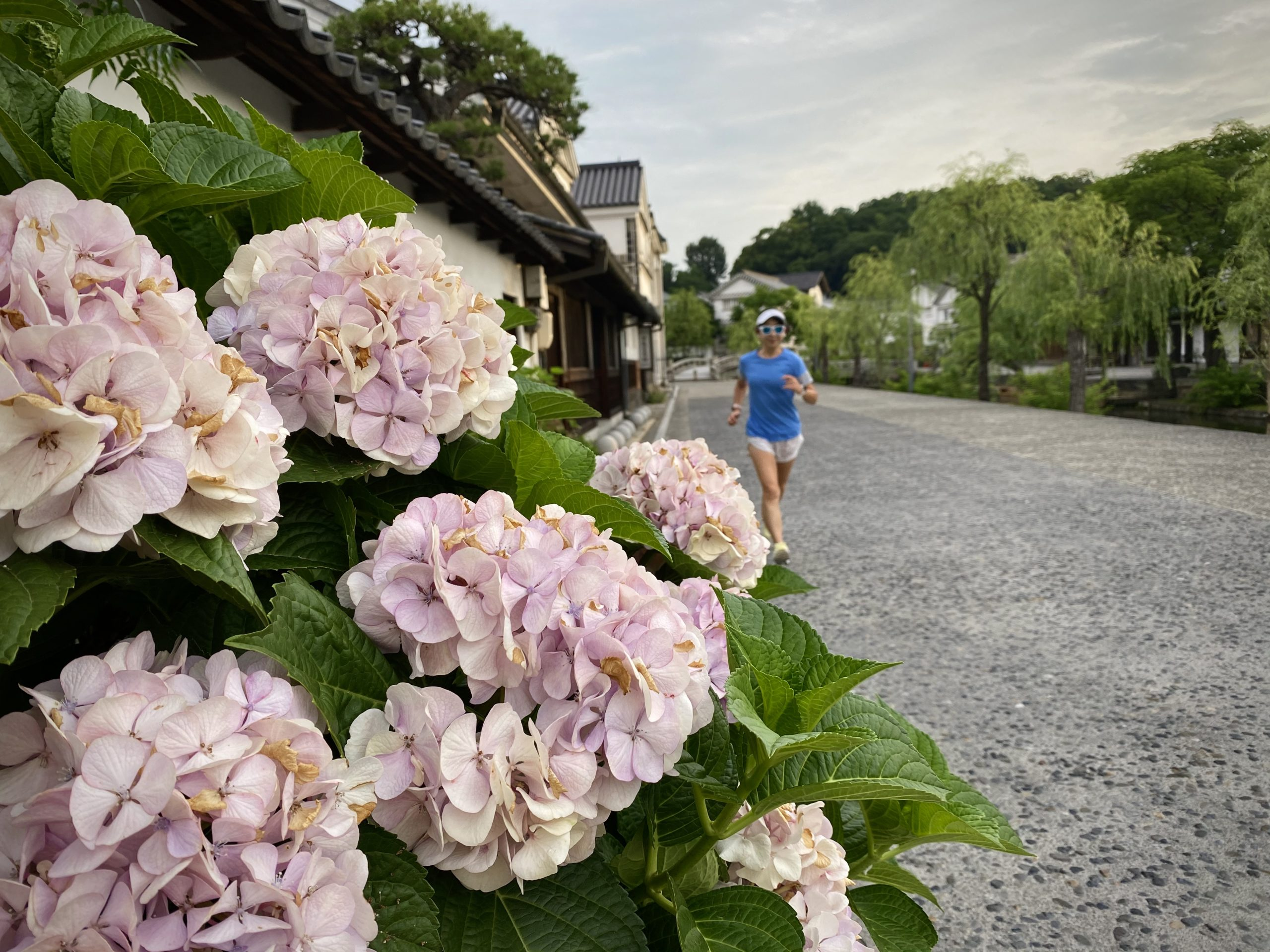 倉敷の美観地区を朝ラン