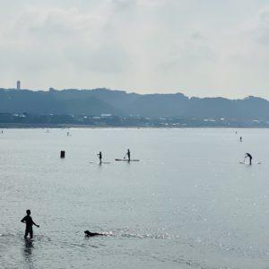 由比ヶ浜でワンちゃんもひと泳ぎ