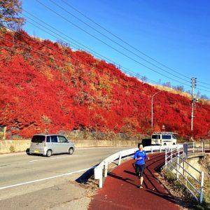 ランニングコース「白樺ぐるりん」車道と分離