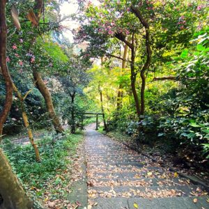 北条義時の墓へ続く階段