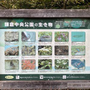 鎌倉中央公園の生き物看板