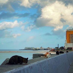 堤防の上の猫の列