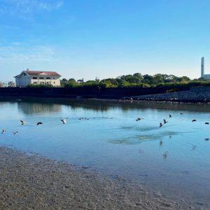 鳥が水遊び2
