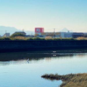 鳥が水遊び1