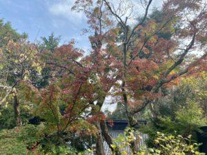 東慶寺入口の紅葉