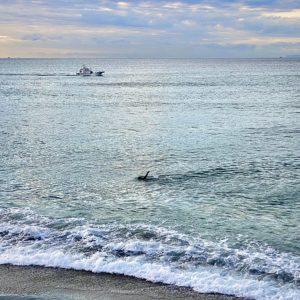 稲村ヶ崎をクロールで泳ぐ人