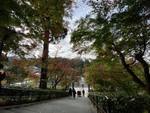 円覚寺階段上から