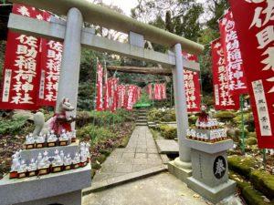 佐助稲荷神社の神狐