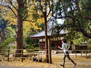 浄智寺の銀杏ラン