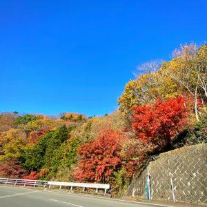 足柄峠の紅葉