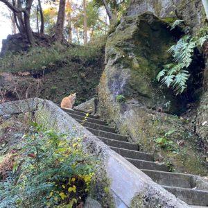 浄智寺の猫