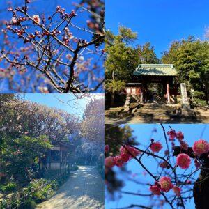 宝戒寺と寿福寺