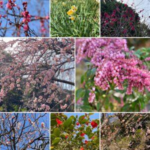海蔵寺の花