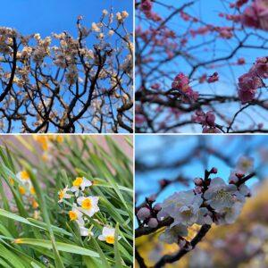 大寶寺の花