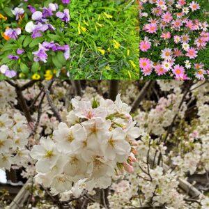 桜など春の花