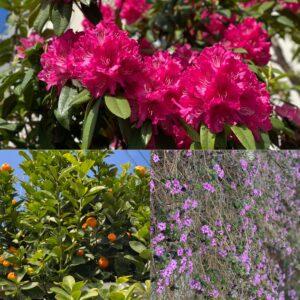 春の花2021