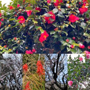 光則寺近辺の花