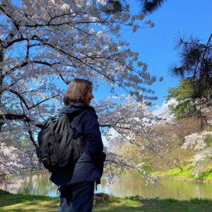 弘前桜まつりへ🌸