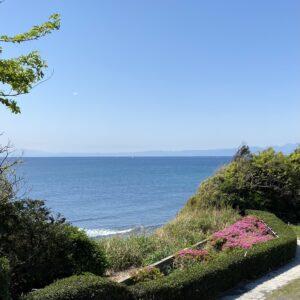 稲村ヶ崎海浜公園から見るツツジ