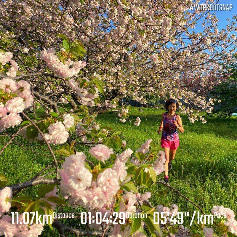"11.07km(5'50"") 疲労時ラン【2021/4/3】in小祝"