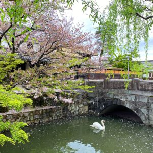 倉敷美観地区の白鳥