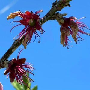 桃の花の中心に実