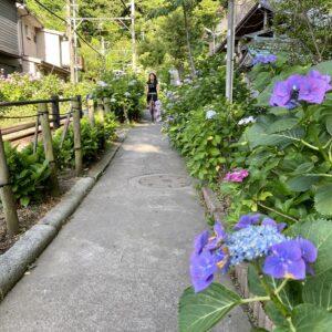 御霊神社で紫陽花ラン2020年