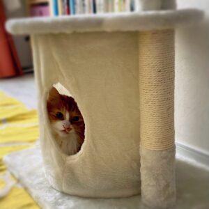 キャットタワーのレオ