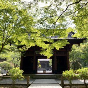 新緑の妙本寺