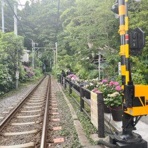 御霊神社の線路脇の紫陽花1
