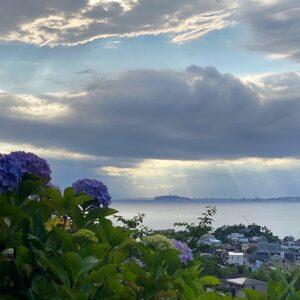 あじさい公園の紫陽花と江の島