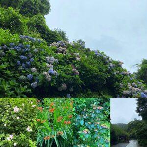瑞泉寺までの道に咲く花