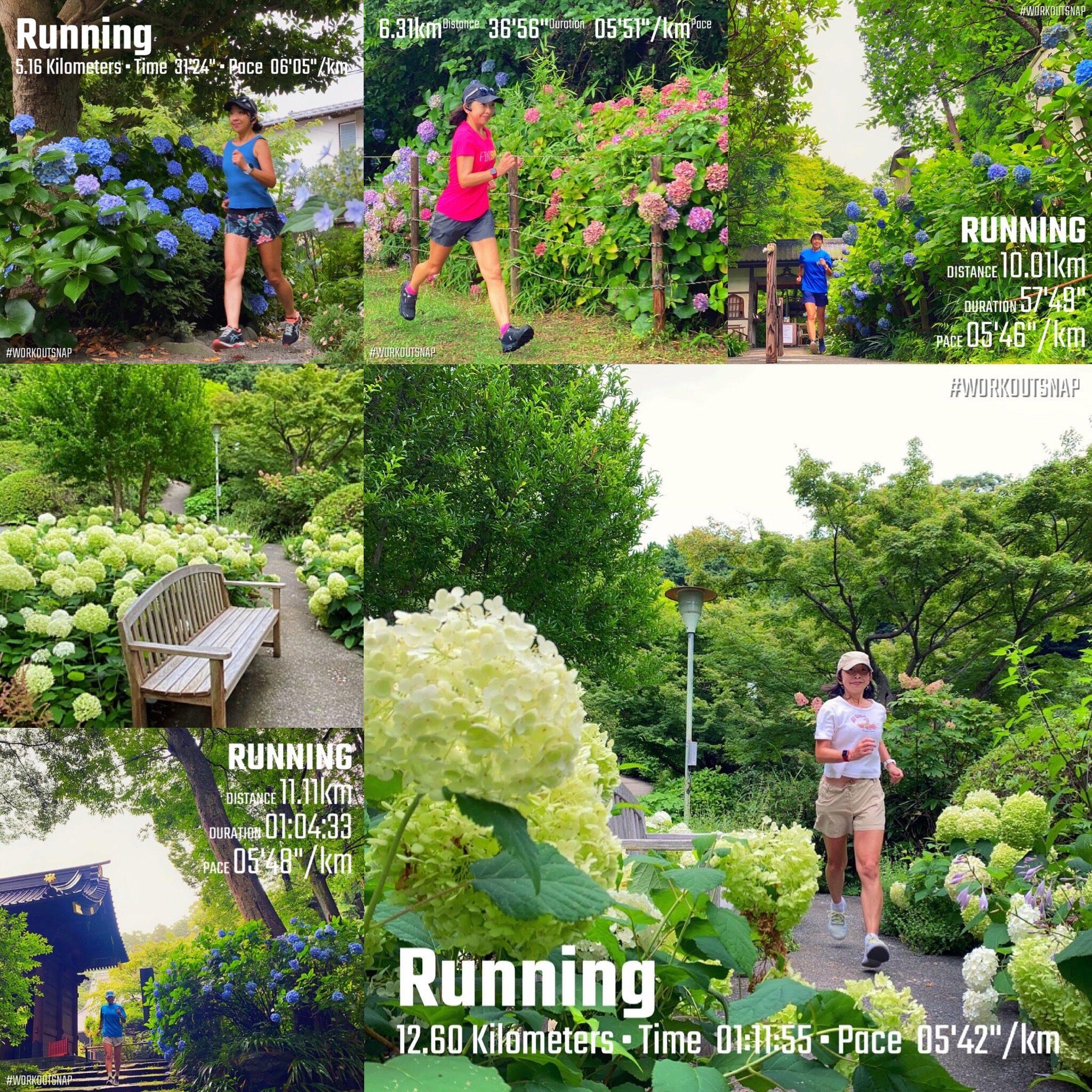 6月の月間走行距離は200km。梅雨時の紫陽花ラン【週刊ラン日誌】