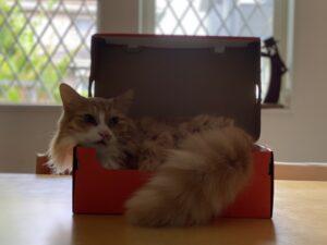 「ナイキ ズーム フライ3」の箱とレオ