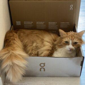 レオin Onの箱