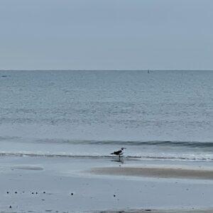 材木座海岸のカモメ